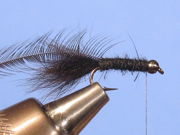 Baby Woolly Bugger - Step 6